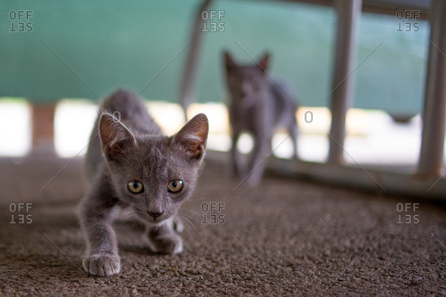Wild kittens approach a camera with caution.