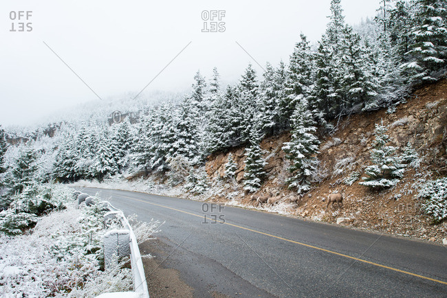 Two lane road through a snow covered forest in the mountains