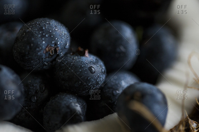 Fresh blueberries in a half of a coconut