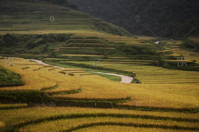 Rice fields in Sa Pa, Vietnam