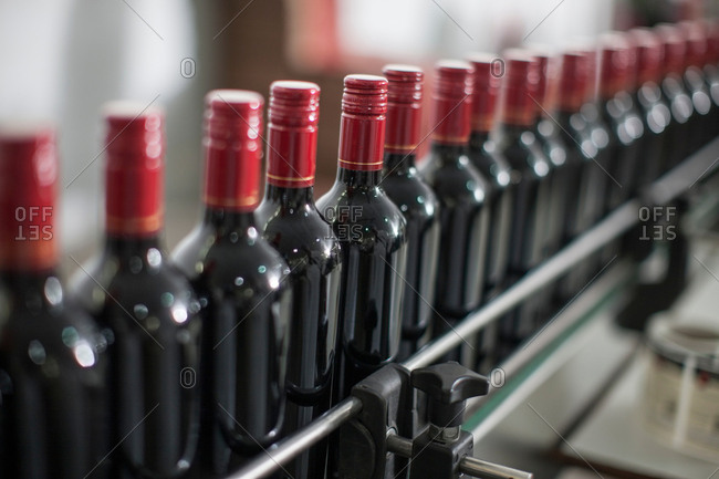 Row of red wine bottles on production line of wine bottling plant