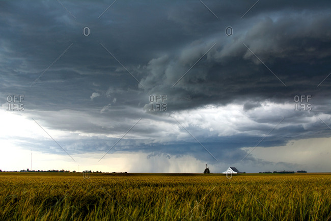 A storm over a golden wheat field threatens a farm and barn south of Tonkawa, Oklahoma