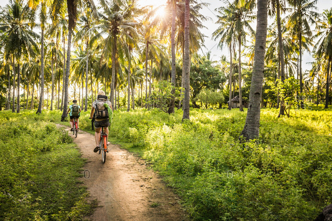 Rear view of two young women cycling in palm tree forest, Gili Meno, Lombok, Indonesia