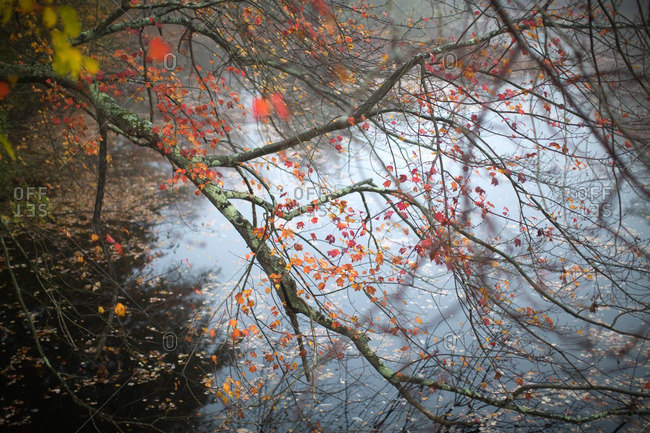 Fall branches over still pond