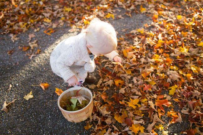 Toddler girl collecting fall leaves