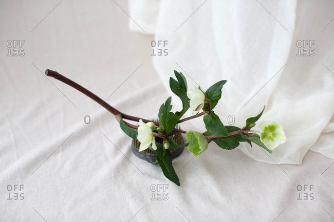 Branch with floral blossoms