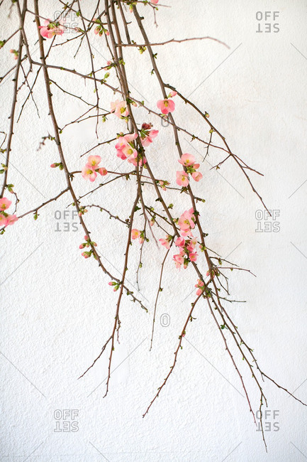 Branches with floral blossoms