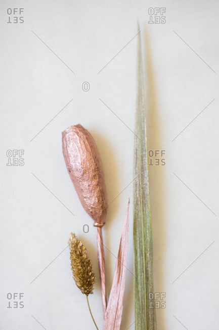 Painted plants on a white background