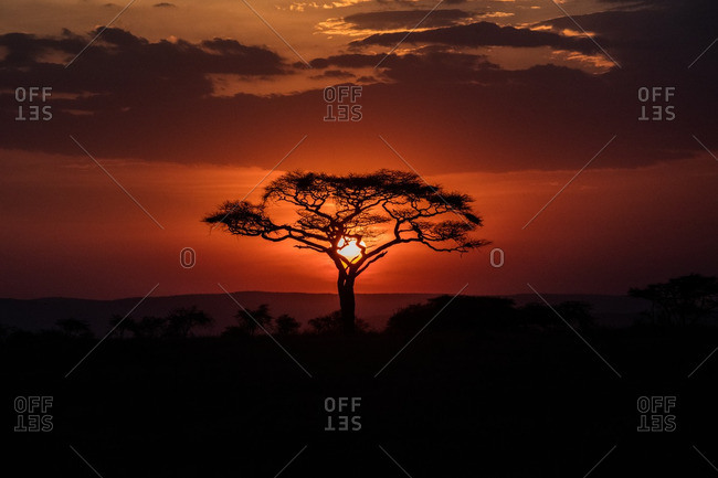 Tree silhouetted by sun, Tanzania