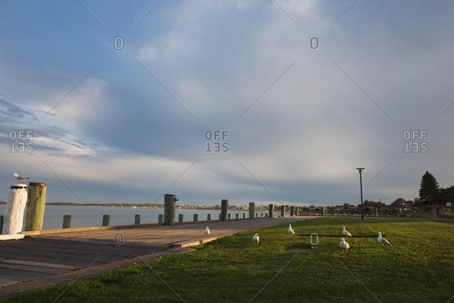 Birds by a coastal boardwalk
