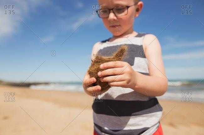 Boy holding dried plant on beach
