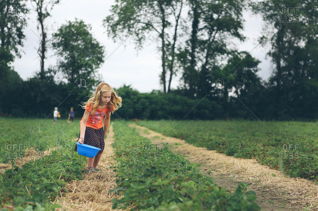 Blonde girl picking strawberries in a field
