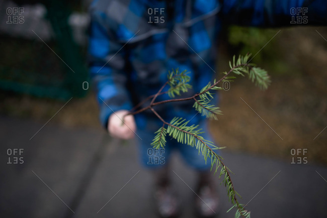 Child holding a pine bough