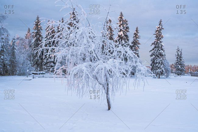 Snow covered tree in a field