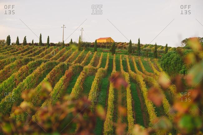 Bird's eye view of a vineyard in autumn