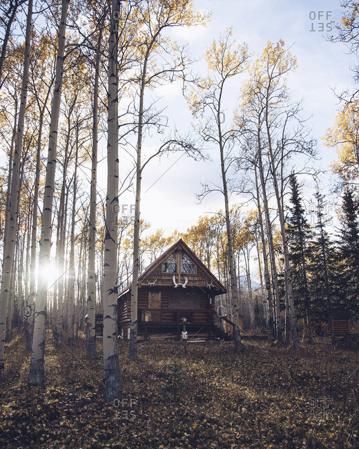 Secluded cabin in a forest in the mountains