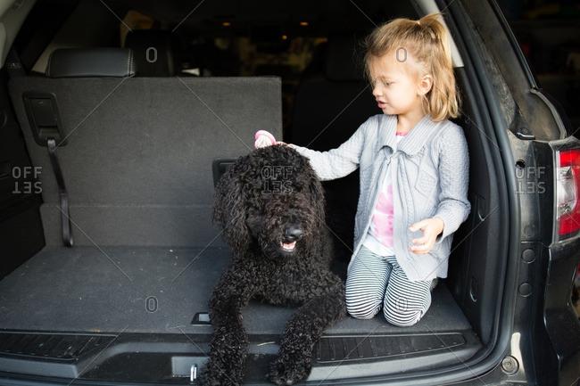 Girl brushing poodle in car