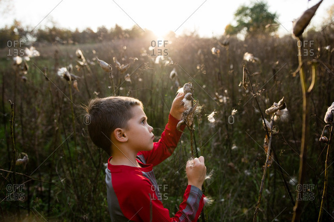 Boy exploring seed pod of plant