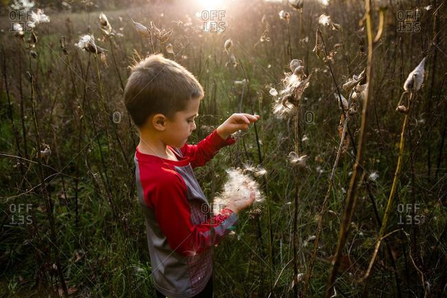 Boy exploring plant's seed pod