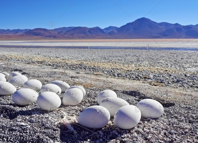 Bolivia, Potosi Departmant, Sur Lipez Province, Eduardo Avaroa Andean Fauna National Reserve, Abandoned Flamingo Eggs on the shore of the Laguna Colorada.