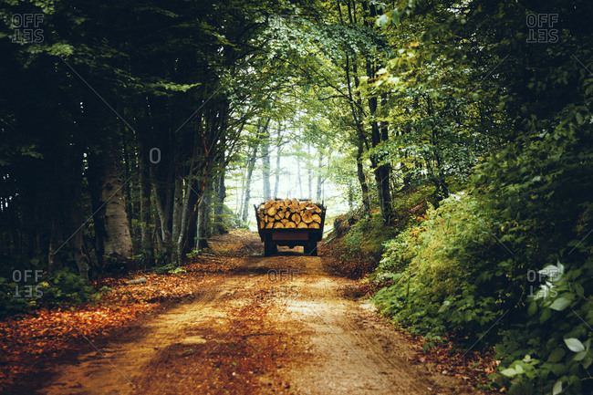 A Tractor With A Trailer Full Of Firewood In Forest In Djakovo Mountain