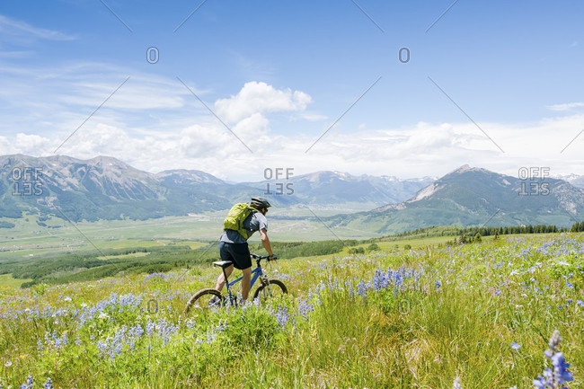 Mountain Biker Riding Through A Field Of Wildflowers In Colorado