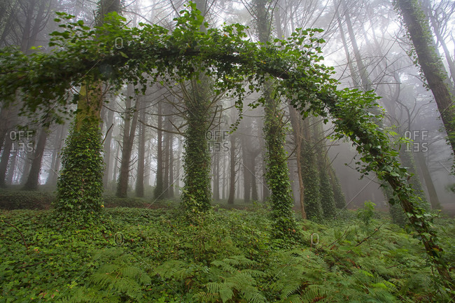 View Of Peninha Forest During Sunrise In Sintra, Portugal