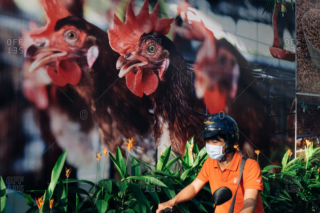 Vietnam - January 14, 2016: Vietnamese man riding scooter past a wall with image of a chicken