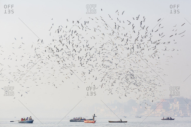 Birds flying over boats on water