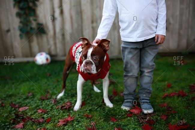 Boy standing with his dog in a Christmas sweater