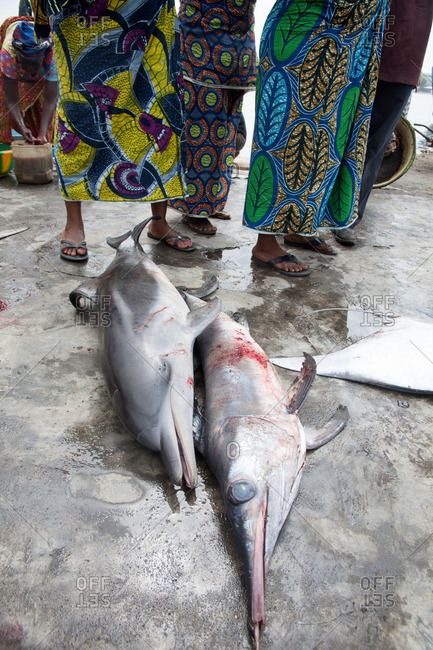 Fresh caught dolphin and swordfish at a fish market in Liberia