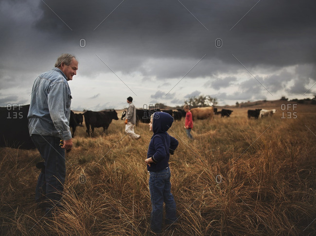 Boy with grandfather and father in field with cattle