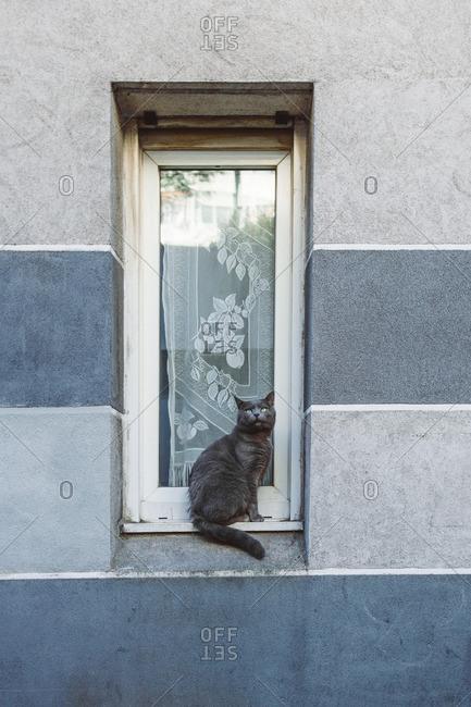 Cat on exterior window ledge