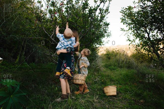 Three kids apple picking together