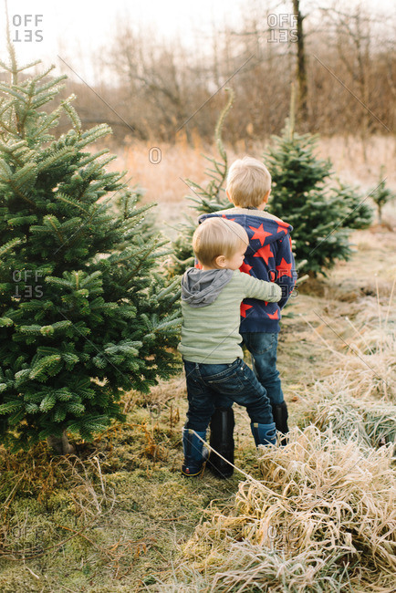 Little boy hugging his brother from behind on a tree farm
