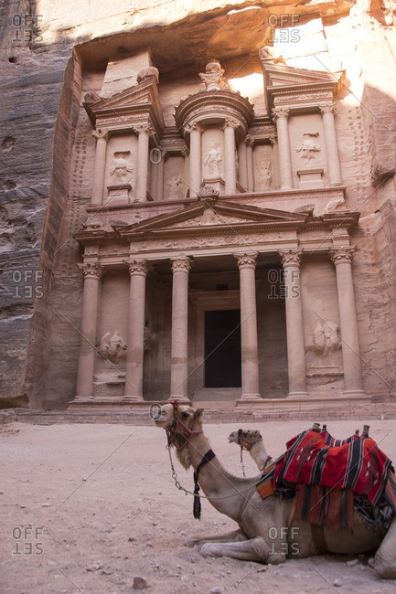 Camels resting by Khaznet in Petra
