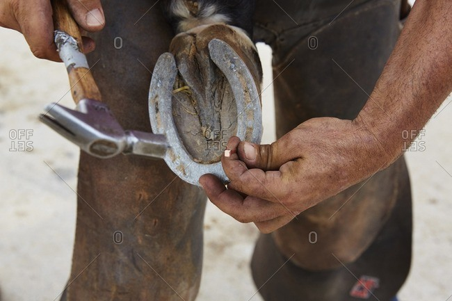 Midsection of man putting shoe on horse