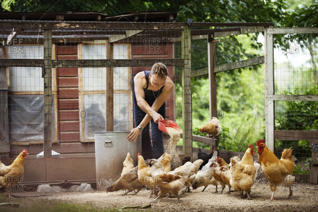 Farmer feeding hens in animal pen