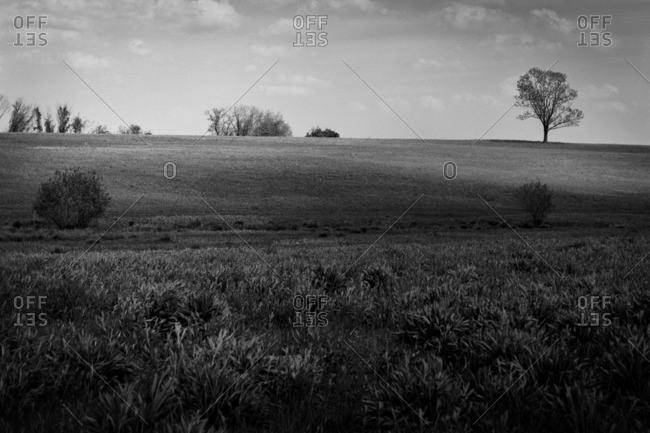 A grassy rural hill setting