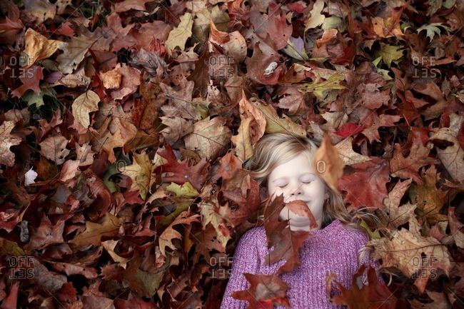 High angle view of girl sleeping on maple leaves