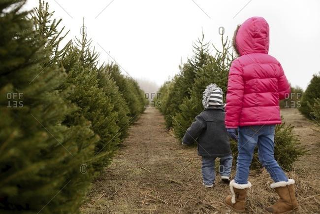 Rear view of siblings walking in Christmas tree farm against clear sky