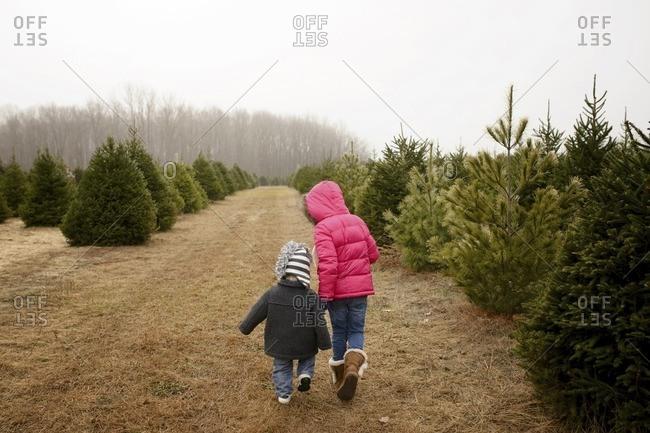 Siblings walking in Christmas tree farm against clear sky