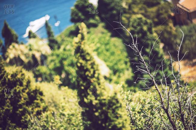 Trees on the coast of Taormina, Sicily, Italy