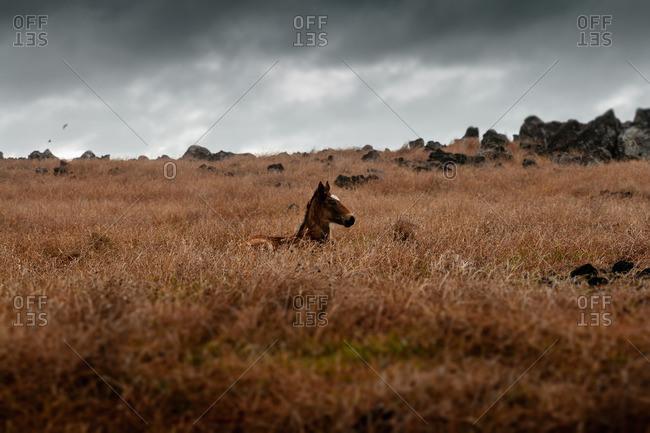 Wild horse under a dark sky
