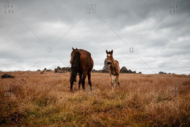 Wild horses under a dark cloudy sky
