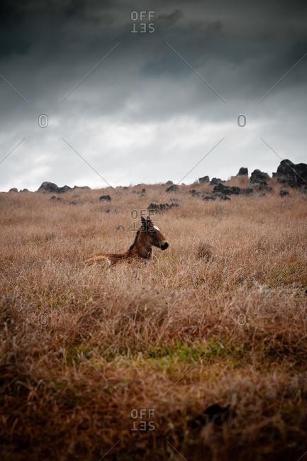 Wild horse under a dark cloudy sky
