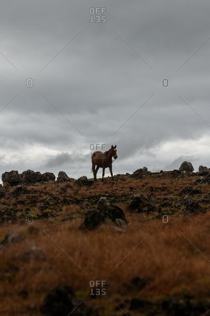 Wild horse grazing in a field under a dark sky