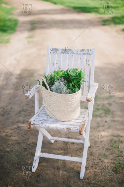 Basket filled with variety of fresh picked herbs on a wooden chair