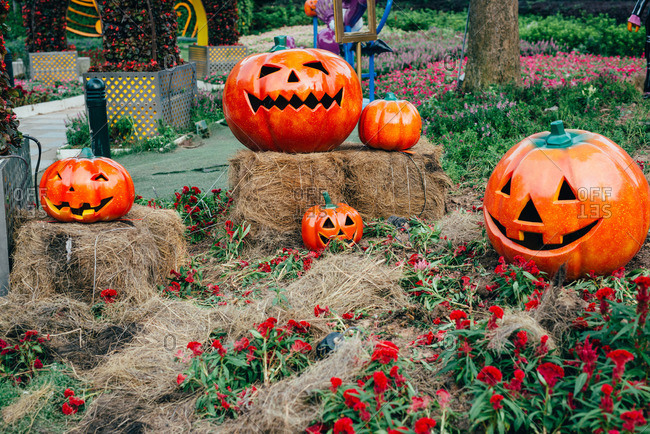 Pumpkin lanterns in fall display