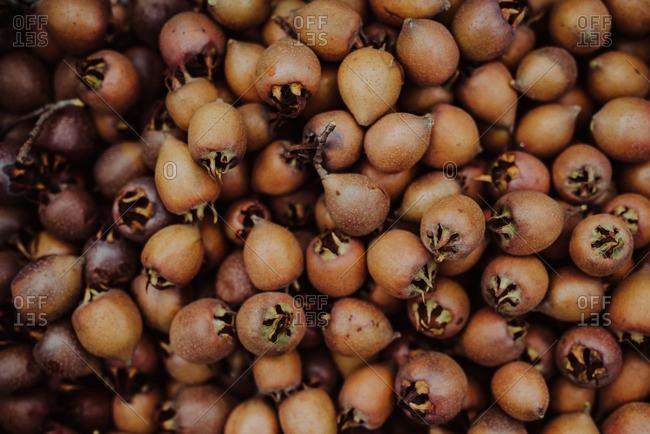 Medlar fruit in close up